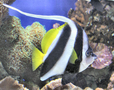 bannre fish 01