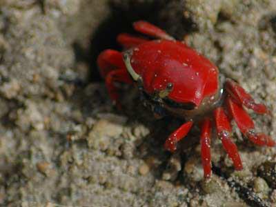 crab02